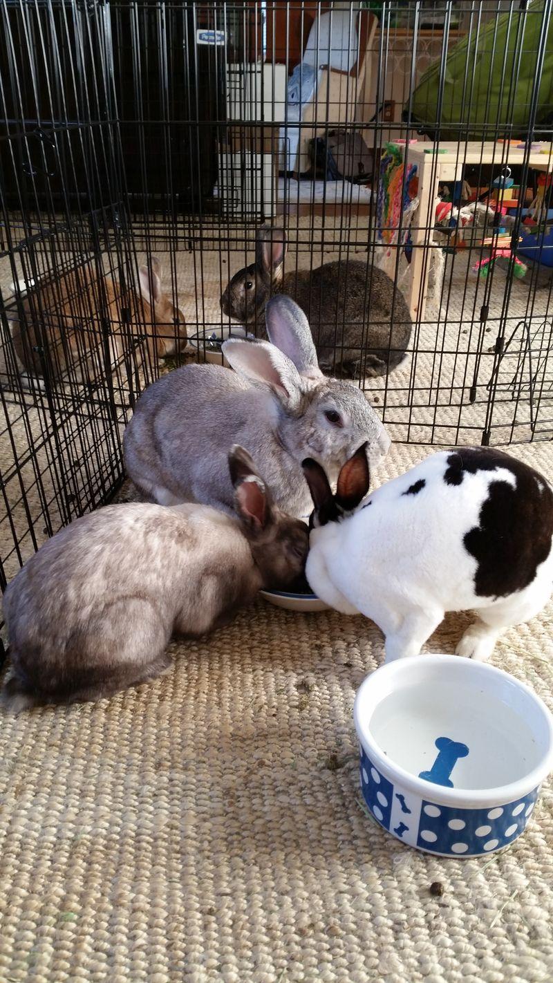 Jessica's Rabbits 2015