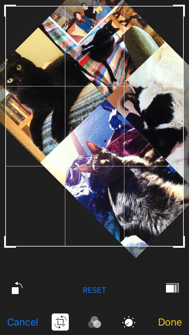 Collagew Merlin